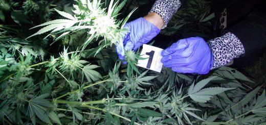 hapsenje droga