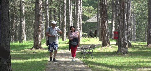 Šetnje stazom kroz borovu šumu