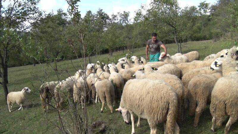 Aleksandar andić veterinar iz Sootnice