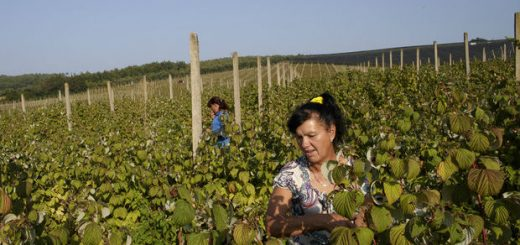 žene na selu