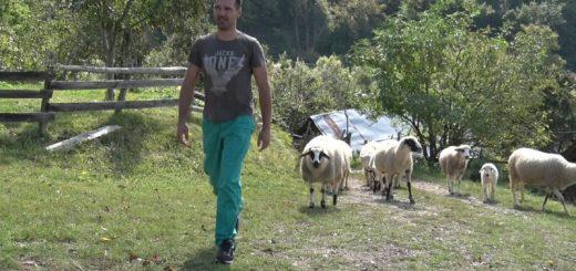 Alkesandar mandić veterinar iz Sopotnice