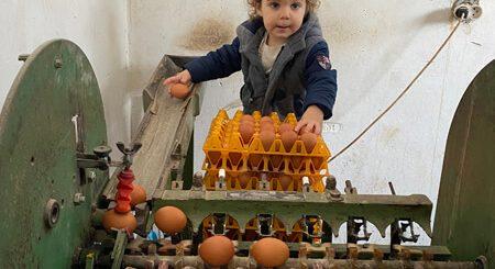 Jakov klasir jaja