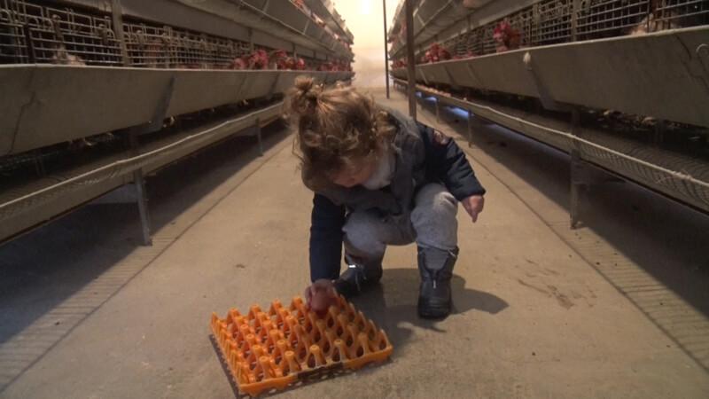 Jakov sakuplja jaja