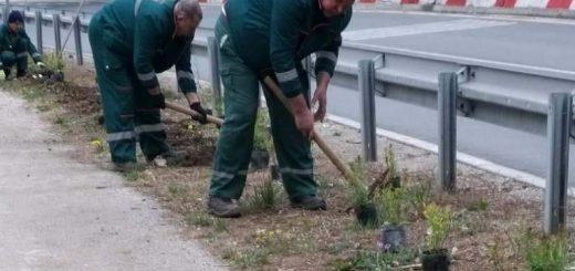 Uređenje zelenih površina