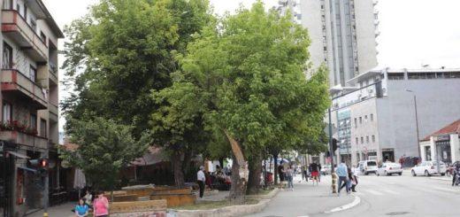 Posečena stabla